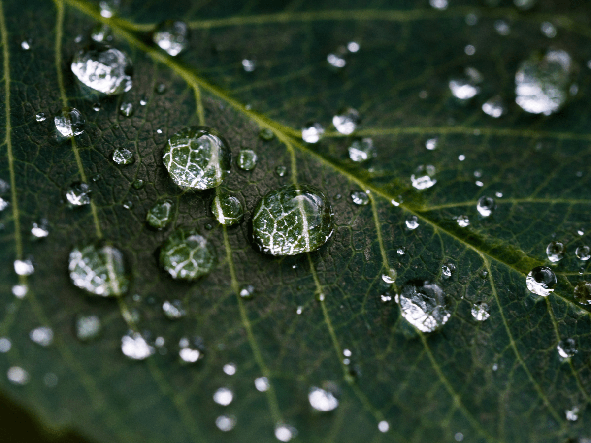 close up of water beads on leaf