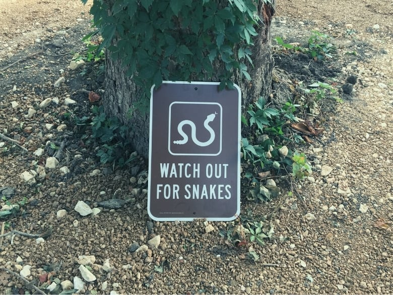 watch out for snake sign resting on tree