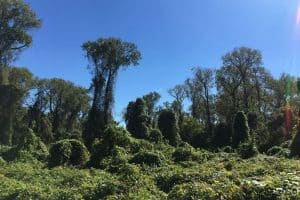 Trees and shrubbery in Stephen F Austin State Park