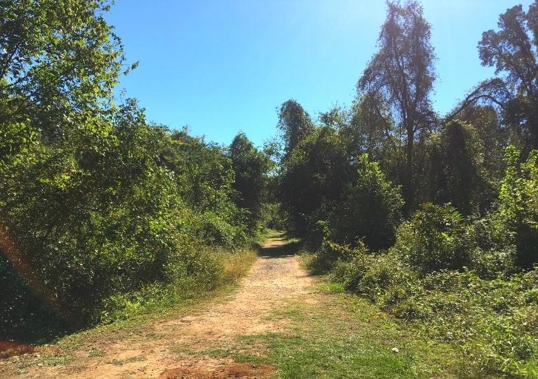 cottonwood trail at stephen f austin